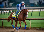 LOUISVILLE, KENTUCKY - MAY 02: Improbable prepares for the Kentucky Derby at Churchill Downs in Louisville, Kentucky on May 01, 2019. Evers/Eclipse Sportswire/CSM
