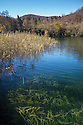 Aquatic plants growing in clear waters in the 'Upper Lakes' region of Plitvice Lakes National Park, Croatia. November.