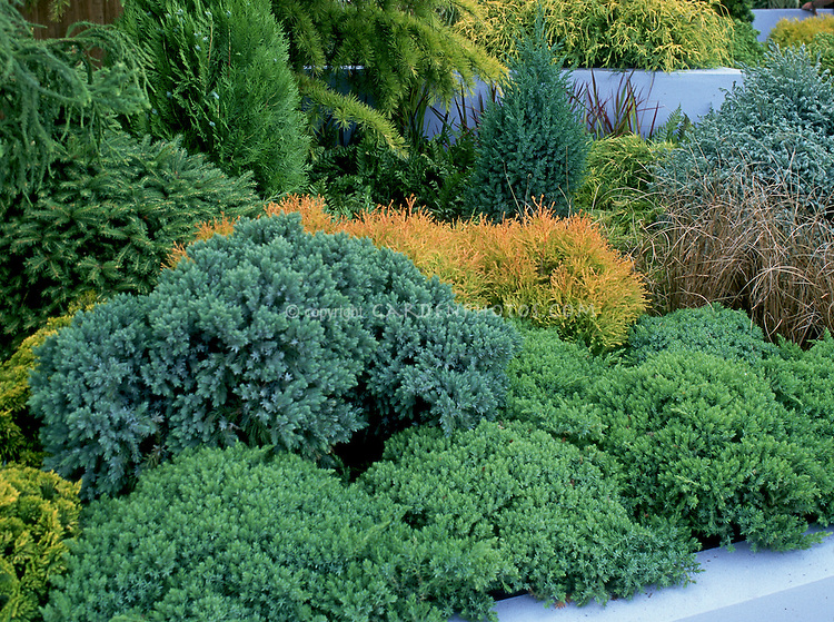 different kinds of evergreen trees and shrubs planted together, Natural flower