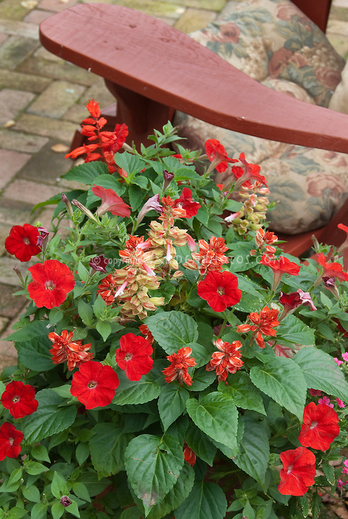 Red themed flowers of petunias, salvia, next to red arm of Adirondack chair on patio