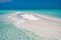 Terns on samll sand island. Turks and Caicos. Providenciales