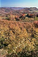 Le Langhe, le colline piemontesi entrano a far parte del Patrimonio Universale dell'Umanità dell'Unesco