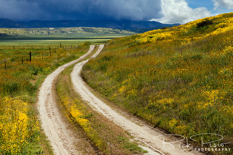 A dirt path makes its way through the wildflowers at the Carrizo Plain National Monument in California.