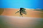 Dunas de Jericoacoara no Ceará. 1993. Foto de Juca Martins.