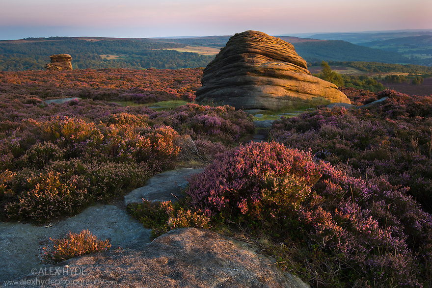 Over Owler Tor with heather in full bloom. Peak District National Park, Derbyshire, UK. September.