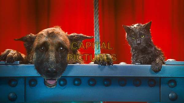 DIGGS, voiced by JAMES MARSDEN and CATHERINE, voiced by CHRISTINA APPLEGATE.in Cats & Dogs: The Revenge of Kitty Galore.*Filmstill - Editorial Use Only*.CAP/FB.Supplied by Capital Pictures.