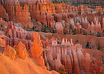 Bryce Canyon National Park, UT: Morning sun in the Bryce Ampitheater backlighting the hoodoos and sandstone ridges