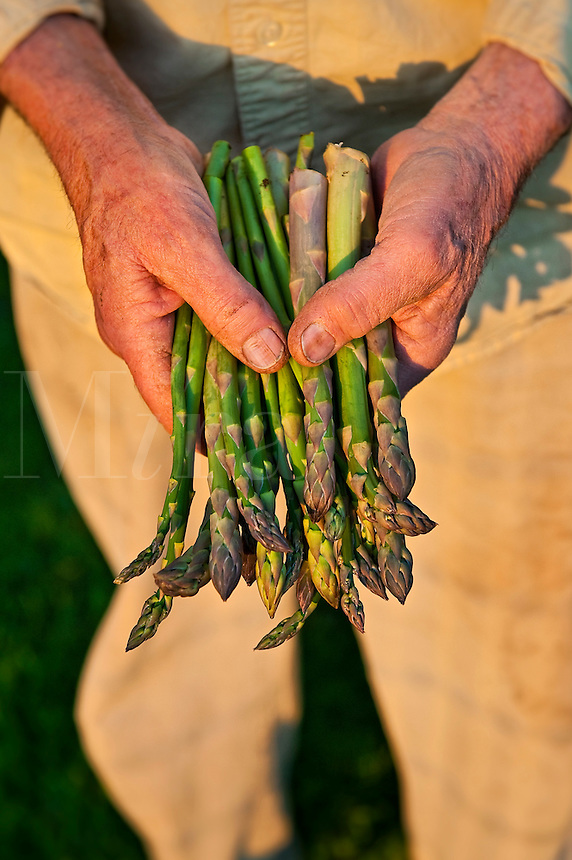 Freshly harvested asparagus from a home garden.