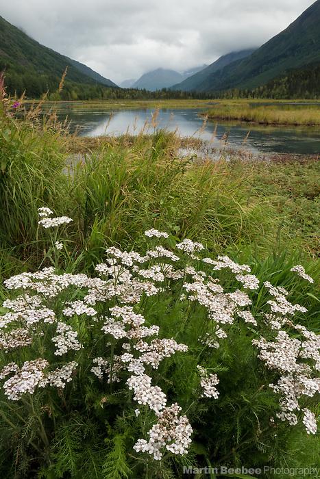 Wildflowers on the edge of Tern Lake on the Kenai Peninsula, Alaska