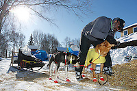 Volunteer vet Bruce Nwadike examines an Ed Stielstra dog on Saturday at the Grayling checkpoing during Iditarod 2011.