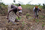 Women prepare the ground for planting on a six-acre farm where several dozen women are farming cassava in Mount Barclay, Liberia. The income-generating project is administered by the National Federation of Women Employees and Allied Workers, with financial support from United Methodist Women.