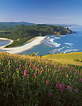 Tillamook County, OR<br /> Hillside of foxglove (Digitalis purpurea)  blooming on Cascade Head above the mouth of the Salmon River and the Oregon coast headlands