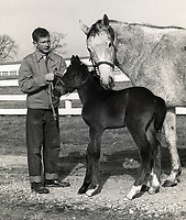Historical horse racing photography collection (in progress) - James W. Same and John C. Wyatt
