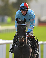 Tzar De L'Elfe ridden by Rex Dingle and trained by Richard Rowe during Horse Racing at Plumpton Racecourse on 4th November 2019