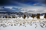 USA, Wyoming, Yellowstone National Park, snowy landscape with trees near the Roosevelt Lodge