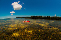 Kayakers, Big Pine Kayak Adventures with mangroves in backgroves, Big Pine Key, Florida Keys, Florida USA