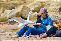 BNPS.co.uk (01202 558833)<br /> Pic: Graham Hunt/BNPS<br /> <br /> On the attack - this Seagull was snapped in the nearby resort of West Bay last year.<br /> <br /> The Seagulls have landed...<br /> <br /> Lyme Regis council have come up with a cunning plan to rid the Dorset seaside town of its seagull menace this Easter - they've recruited two huge bald eagles to patrol the genteel resort.<br /> <br /> Tourism bosses fear over aggressive seagulls are scaring away visitors and have hired the two fearsome birds of prey to patrol the beaches and promenades this Easter.<br /> <br /> Like many coastal resorts, Lyme Regis in Dorset has a longstanding problem with angry gulls attacking tourists and pinching their chips and ice creams.<br /> <br /> Initial reports after the first deployment of eagles Winnie and Kojak yesterday suggest that the Seagull's are now keeping their distance.