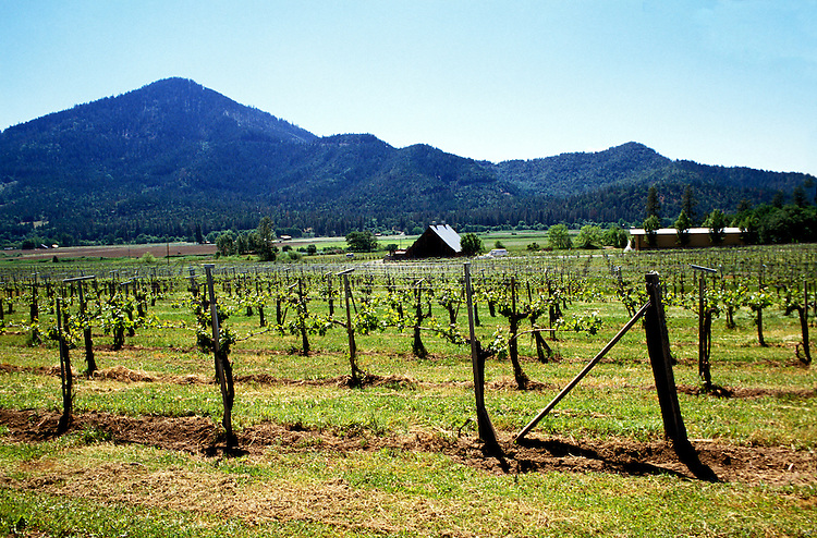 Applegate Valley near Ashland, Oregon.  Valley View Winery.  Photo #: orrogu104.  Photo copyright Lee Foster, www.fostertravel.com, 510/549-2202, lee@fostertravel.com