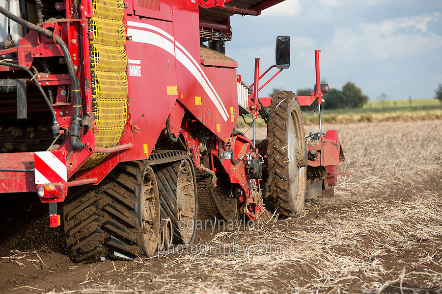 Harvesting Maris Piper potatoes with a 3 row Grimme Varitron 470 - Lincolnshire, October