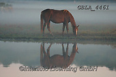 Bob, ANIMALS, REALISTISCHE TIERE, ANIMALES REALISTICOS, horses, photos+++++,GBLA4461,#a#, EVERYDAY