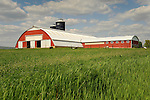 Barn, silos and ryegrass in Spring. Kishacoquillas Valley, PA.