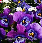 Gisela, FLOWERS, BLUMEN, FLORES, photos+++++,DTGK2479,#f#, EVERYDAY