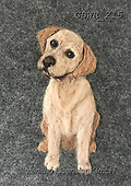 Simon, REALISTIC ANIMALS, REALISTISCHE TIERE, ANIMALES REALISTICOS, innovative, paintings+++++SharonS_Labrador,GBWR215,#a#, EVERYDAY dogs,breeds of dog,