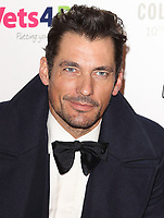 David Gandy at the Collars &amp; Coats Gala Ball 2018 at Battersea Evolution, Battersea Park, London on Thursday 1st November 2018<br /> CAP/JIL<br /> &copy;JIL/Capital Pictures