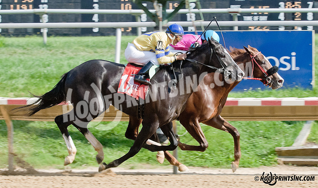 Interchange winning The Whirling Ash Stakes before being DQ'd to second at Delaware Park on 9/5/13 Jessethemarine was put up to 1st