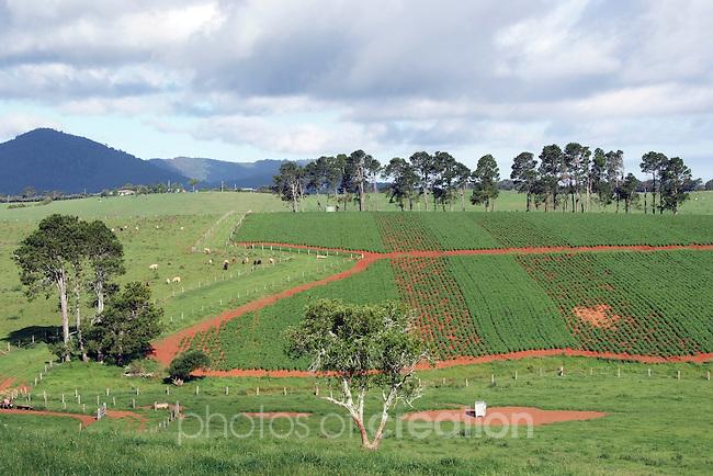 Dorrigo Plateau Rural Landscape