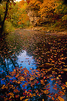 Fall on North fork of Grindstone creek with multicolored leaves, water, and rock