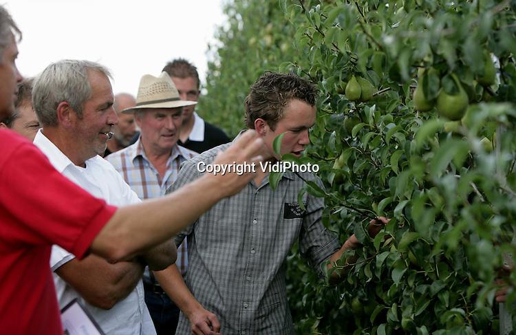 Foto: VidiPhoto..RANDWIJK - Fruittelers uit het hele land bezoeken donderdag de opendag van het Fruitkenniscentrum Randwijk. Foto: Uitleg bij het nieuwe perenras Xenia