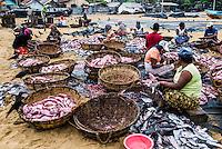 Negombo fish market (Lellama fish market), women gutting fish, Negombo, West Coast of Sri Lanka, Asia. This is a photo of women gutting fish at Negombo fish market (Lellama fish market), Negombo, West Coast of Sri Lanka, Asia.