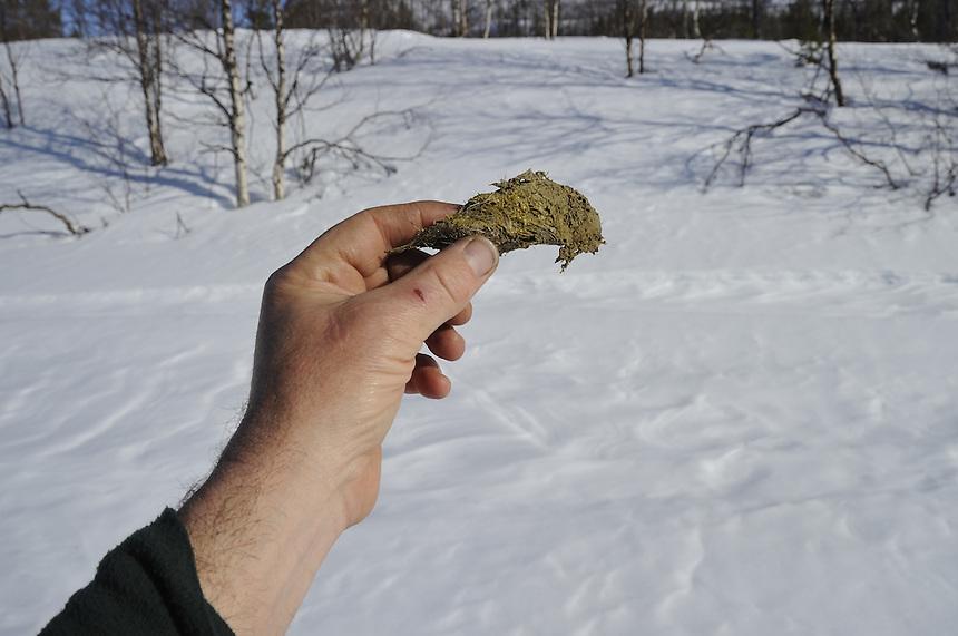 From Sarek national park,Sweden