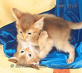 Marek, ANIMALS, REALISTISCHE TIERE, ANIMALES REALISTICOS, cats, photos+++++,PLMP2715,#a#