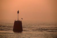 Europe/France/Bretagne/29/Finistère/Env du Conquet: Cormorans sur une balise