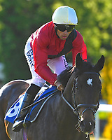 Real Smooth ridden by Sean Levey goes down to th<br /> start of The Saunton Sands Hotel North Devon Maiden Stakes during Evening Racing at Salisbury Racecourse on 25th May 2019