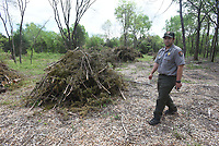 NWA Democrat-Gazette/FLIP PUTTHOFF <br /> Moore shows        April 2017      cedars that were cut at Pea Ridge National Military Park. Park staff and Conservation Corps of Iowa workers are removing cedar trees, Moore said.
