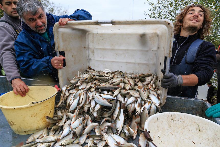France, Indre (36), Parc Naturel R&eacute;gional de la Brenne, Rosnay, p&ecirc;che de l'&eacute;tang Foucault par la pisciculture le Maroc et le personnel du parc // France, Indre, Regional Natural Reserve of Brenne, Rosnay, <br /> Foucault fishing pond