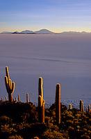 Isla del Pescado, Salar de Uyuni, Bolivia, 1999.