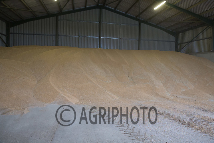 Wheat in store<br /> Picture Tim Scrivener 07850 303986<br /> &hellip;.covering agriculture in the UK&hellip;.