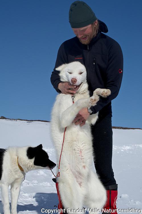 Mann og grønlandshund. ---- Man and greenland dog.