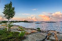 Björk träd på klippa vid havet ipå Rödlöga i Stockholms ytterskärgård Roslagen