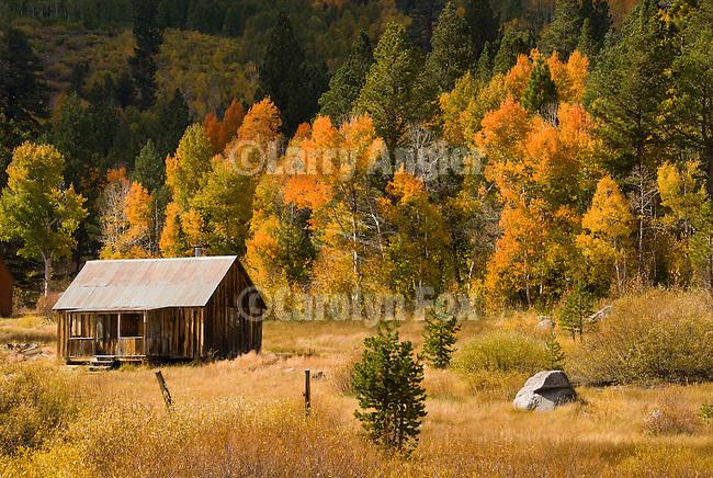 Cabin in a meadow by an aspen grove, autumn, Alpine Co., Calif.