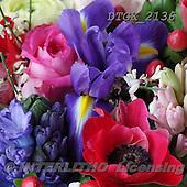 Gisela, FLOWERS, BLUMEN, FLORES, photos+++++,DTGK2136,#f#