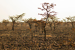 Burned savanna, Kafue National Park, Zambia