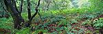 Yorkshire woodland