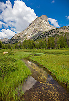 Wind River Range, WY: Summer meadow and stream with Lizard Head Peak in the distance; Bridger Wilderness in the Bridger National Forest in summer