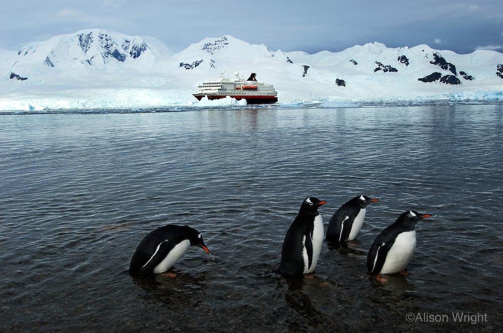 Antarctica/Hurtigruten Cruise Lines