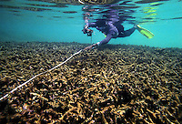 Dead corals. This coral reef bleached and died in 1998 due to a rise in water temperature, believed to be caused by global warming. When inspected a year later by marine biologists, no recovery was detected...